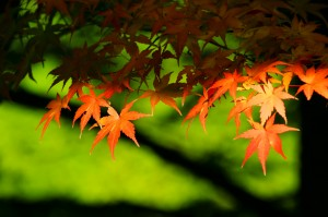 autumn-leaves_00007
