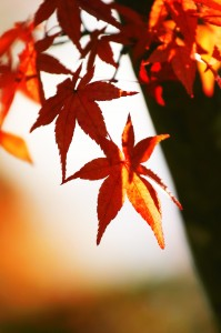 autumn-leaves_00083 (1)