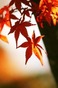 autumn-leaves_00083 (1)