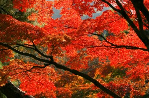 autumn-leaves_00121