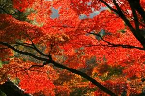 autumn-leaves_00121