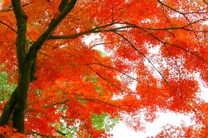 autumn-leaves_beiz.jp_M06383